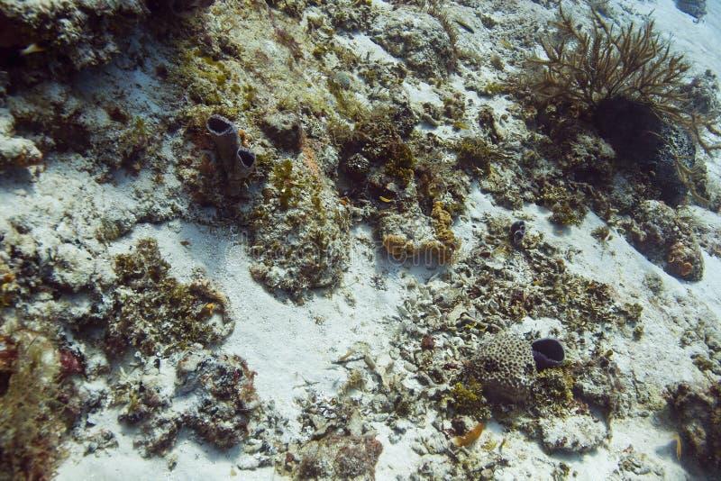 Живущее дно океана стоковые фотографии rf