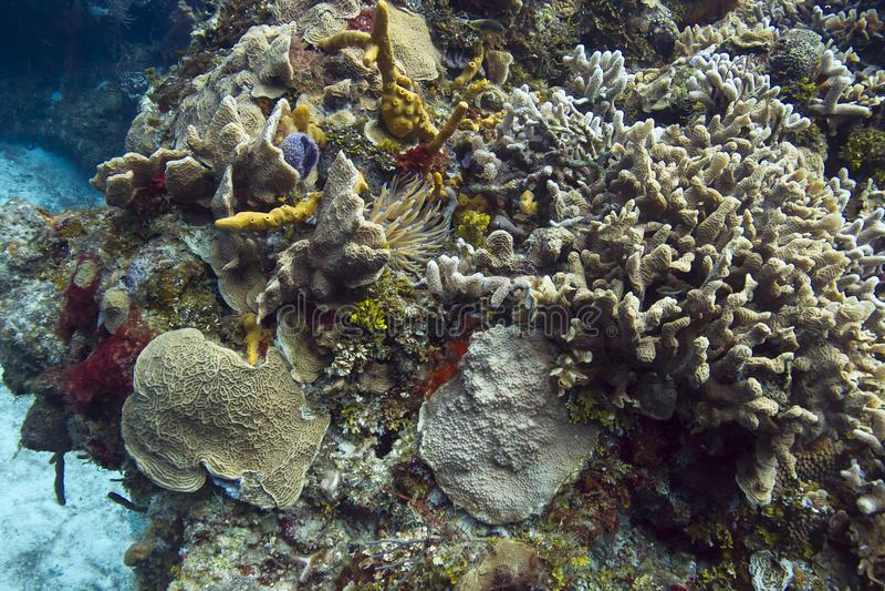 Живущий коралловый риф стоковые фотографии rf