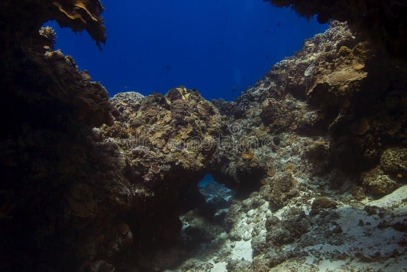Живущий коралловый риф стоковое фото rf