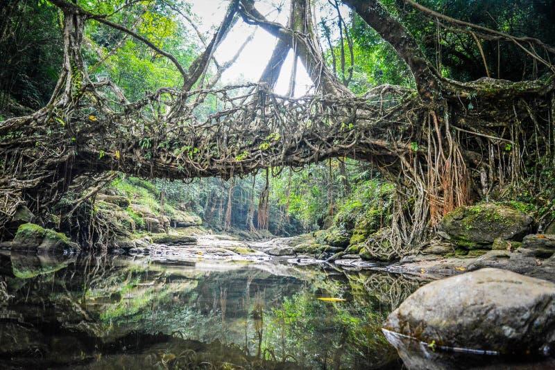Живущий мост корня стоковое изображение rf