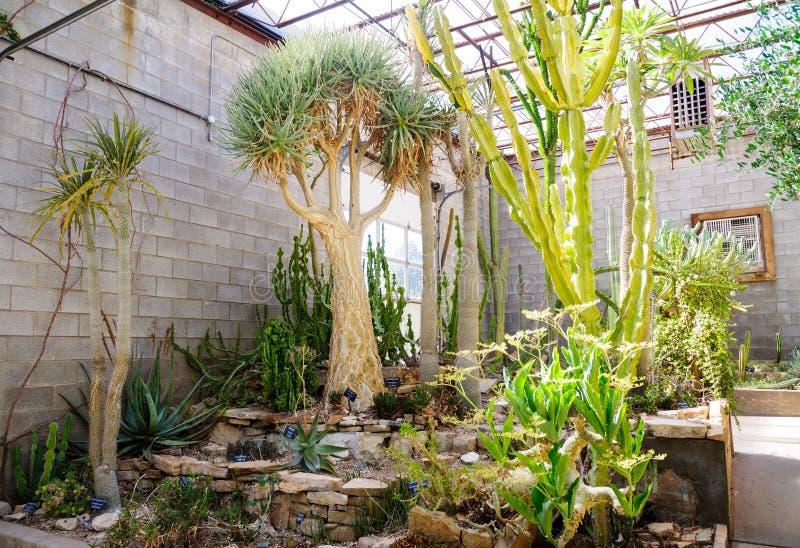 Живущий парк штата садов зоопарка пустыни стоковые изображения rf