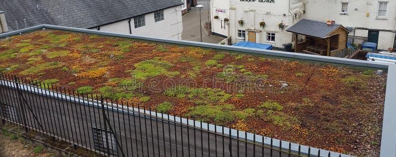 Живущий сад крыши стоковая фотография