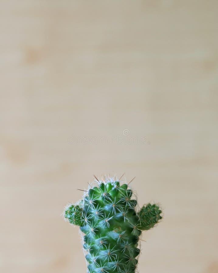 Живые зеленые милые мини заводы кактуса, вертикальное изображение стоковые изображения rf