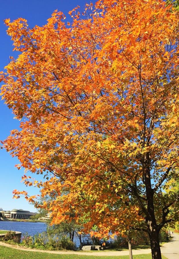 Живые цвета падения стоковое изображение