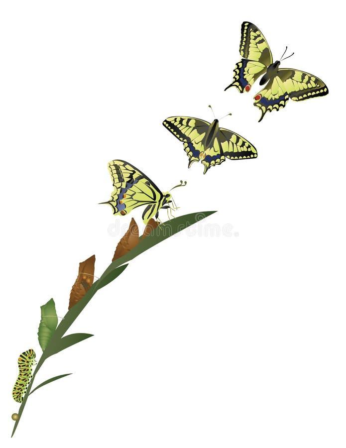 Жизненный цикл бабочки. иллюстрация вектора