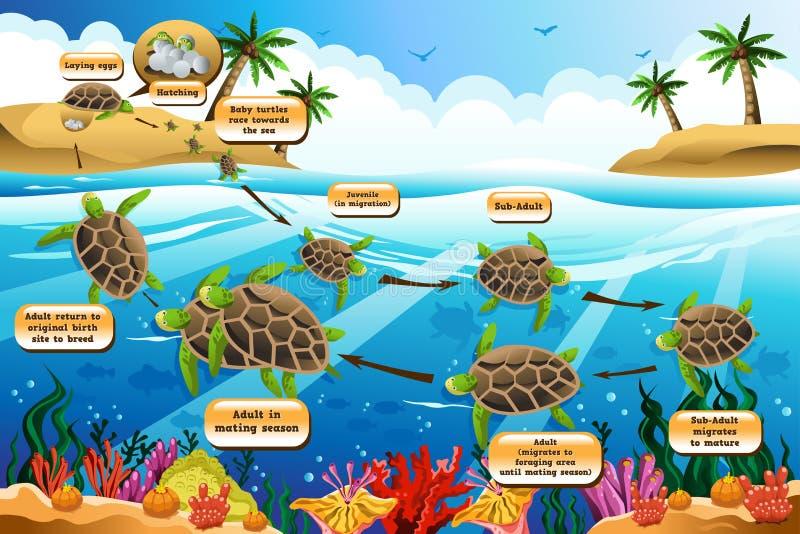 Жизненный цикл морской черепахи бесплатная иллюстрация