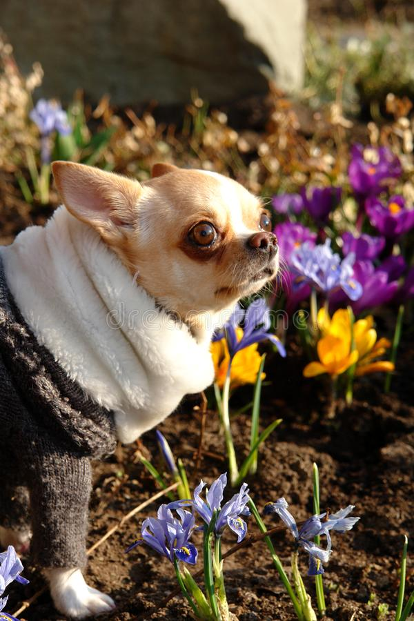 Жизнерадостная собака в цветах весеннего дня стоковые изображения