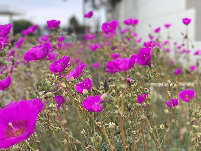 Жизнерадостные цветки стоковые изображения rf