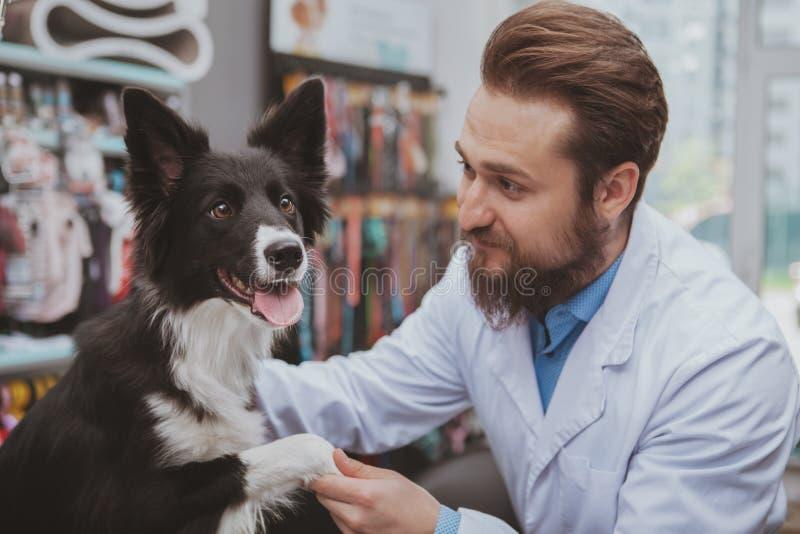 Жизнерадостный бородатый мужской ветеринар рассматривая красивую собаку стоковые фотографии rf