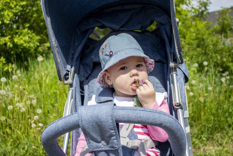 Жизнерадостный ребенок 9 месяцев есть клевер сидя в прогулочной коляске Ребенок ест дикие растения, дочь встречает природу стоковая фотография