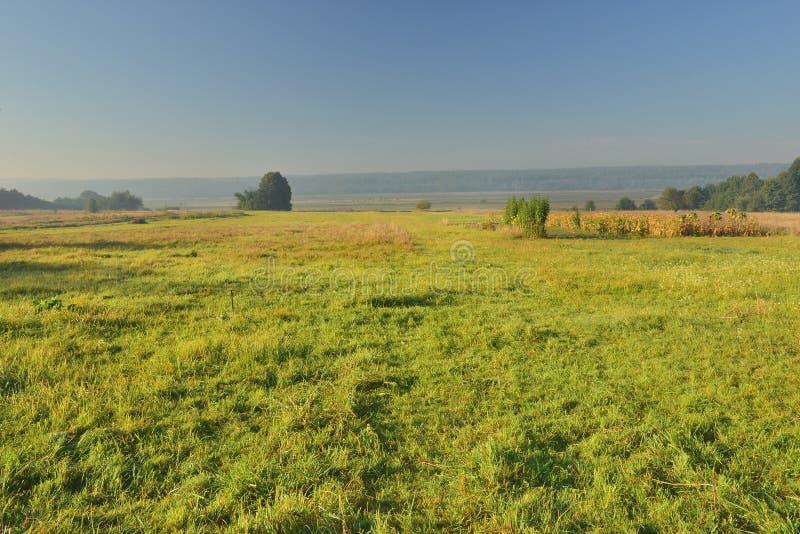 жизни лилии утра село долины все еще стоковое фото