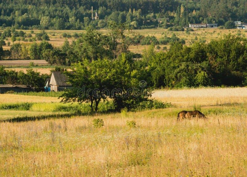 жизни лилии утра село долины все еще стоковые фото