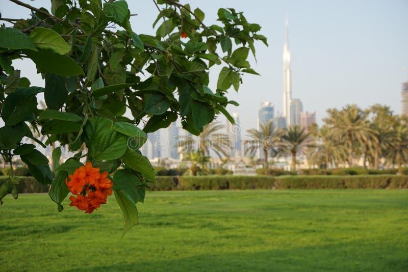 Жизнь высокотехнологичного и природы в ОАЭ стоковые изображения rf