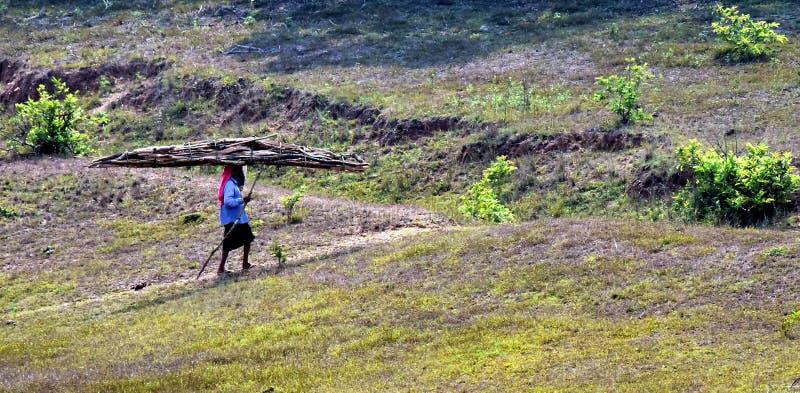 Жизнь в зеленом лесе, Керала племени стоковое изображение