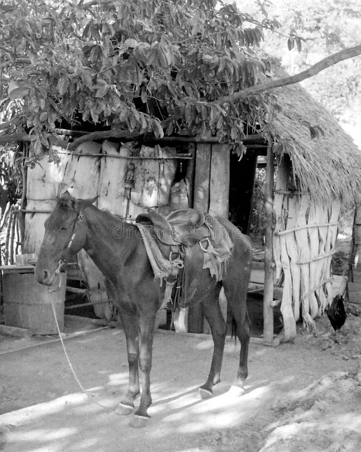 Жизнь деревенская стоковые фотографии rf