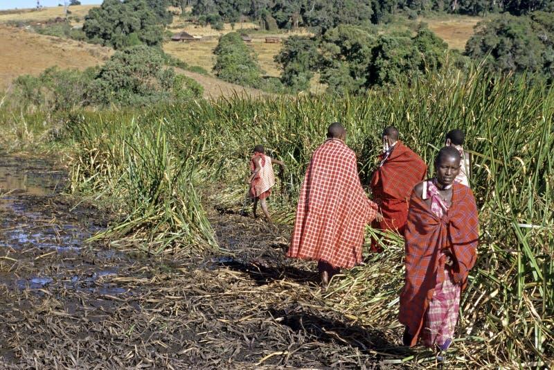 Жизнь деревни Maasai в Восточно-африканской зоне разломов заповедника стоковое фото rf
