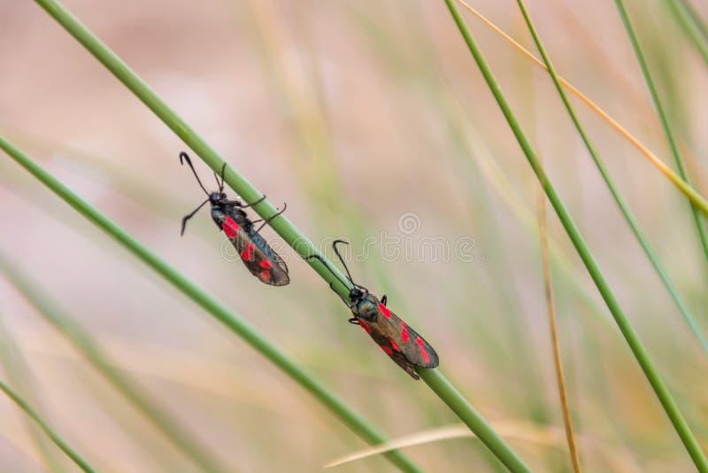 Жизнь жуков в двух красивых чистых листьях цветов удивительный вид стоковая фотография
