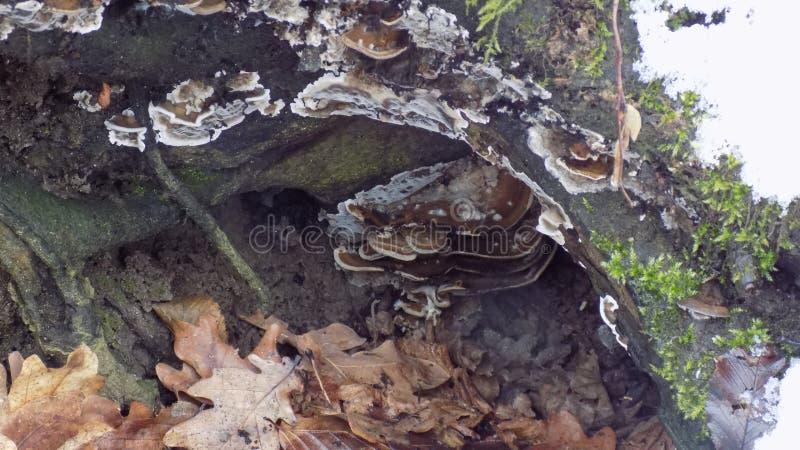 Жизнь зимы, гриб дерева стоковые фото