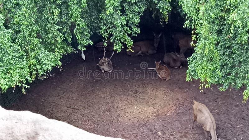 Жизнь зоопарка стоковая фотография rf