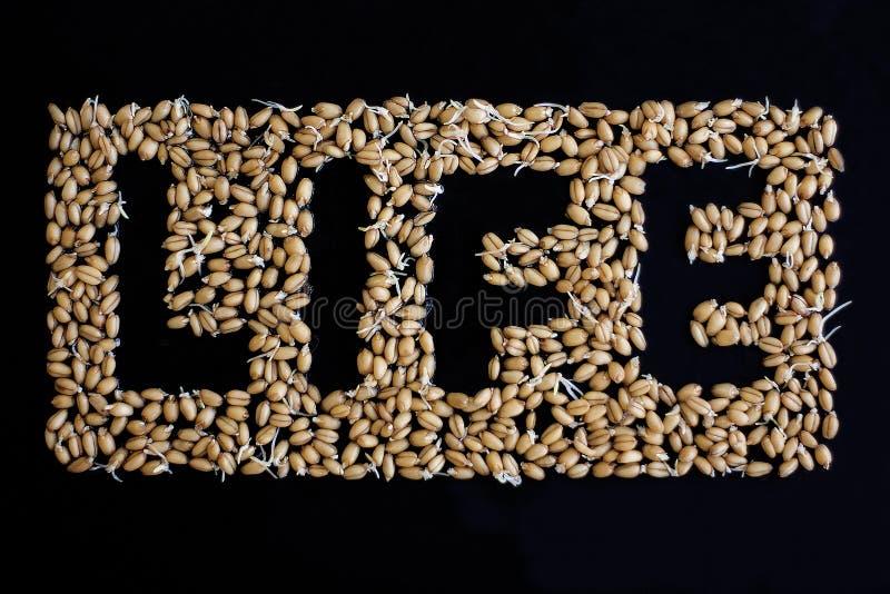 Жизнь и пшеница Сформулируйте жизнь сформированную от corns пшеницы на черной предпосылке изображения экологичности принципиально стоковое фото rf