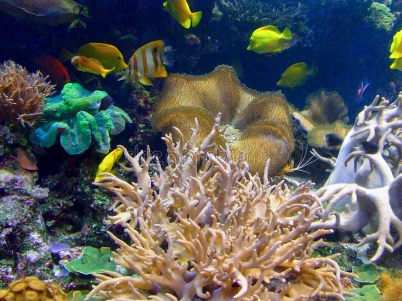 жизнь коралла стоковые фотографии rf