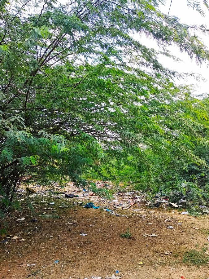 Жизнь леса юга Индии стоковые изображения rf