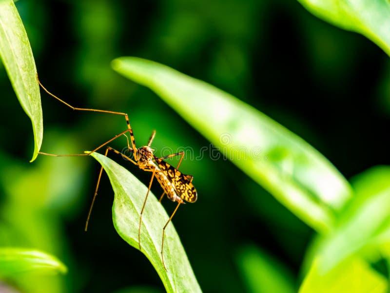 Жизнь насекомого, между листьями стоковые изображения