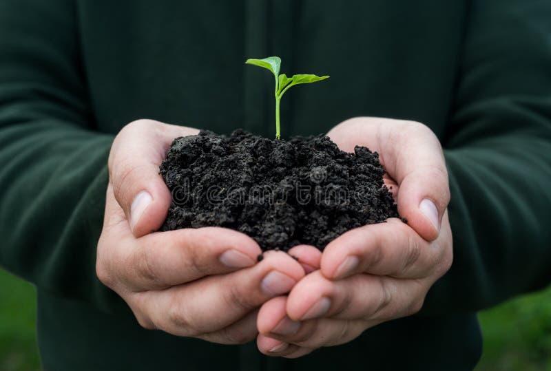 жизнь новая жизни удерживания руки хуторянина консервации детеныши символа завода относящой к окружающей среде свежей новые стоковое фото