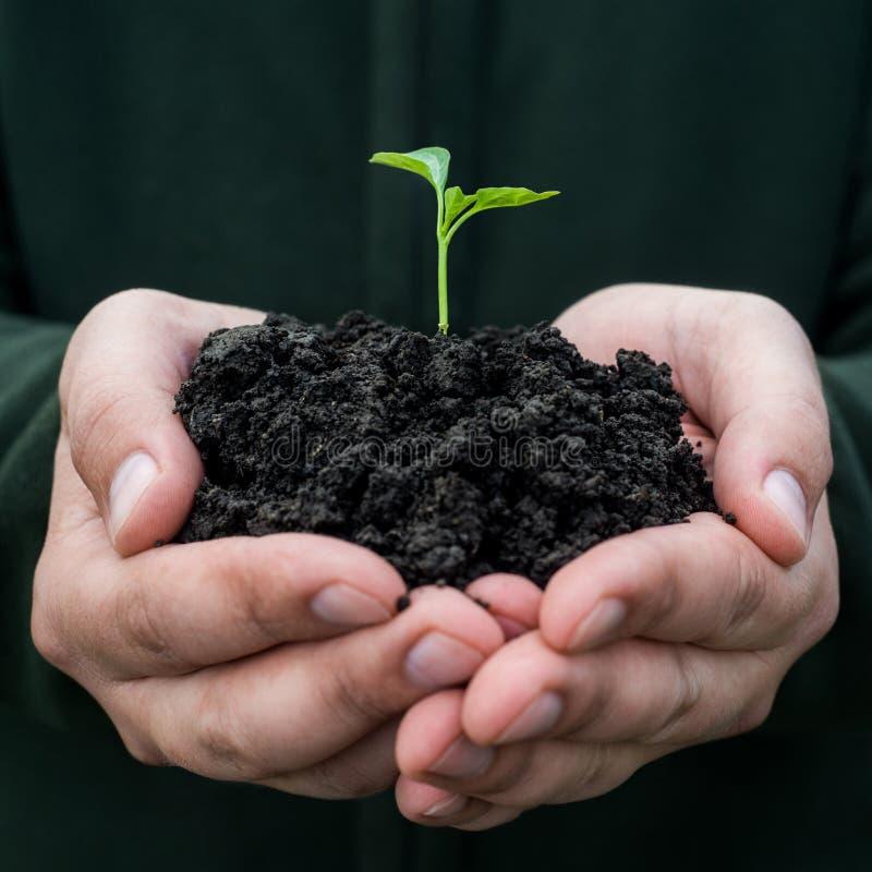 жизнь новая жизни удерживания руки хуторянина консервации детеныши символа завода относящой к окружающей среде свежей новые стоковые фото