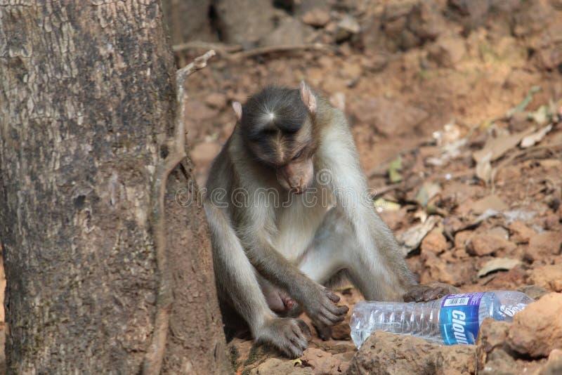 Жизнь обезьяны стоковое изображение rf