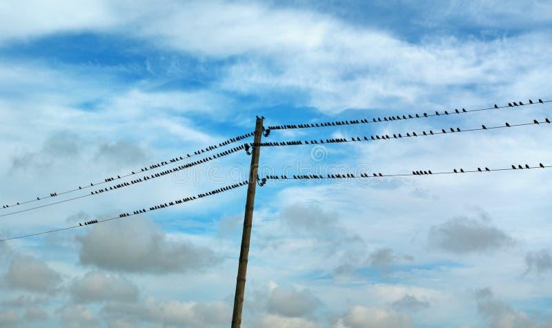 Жизнь одичалых птиц стоковое изображение rf