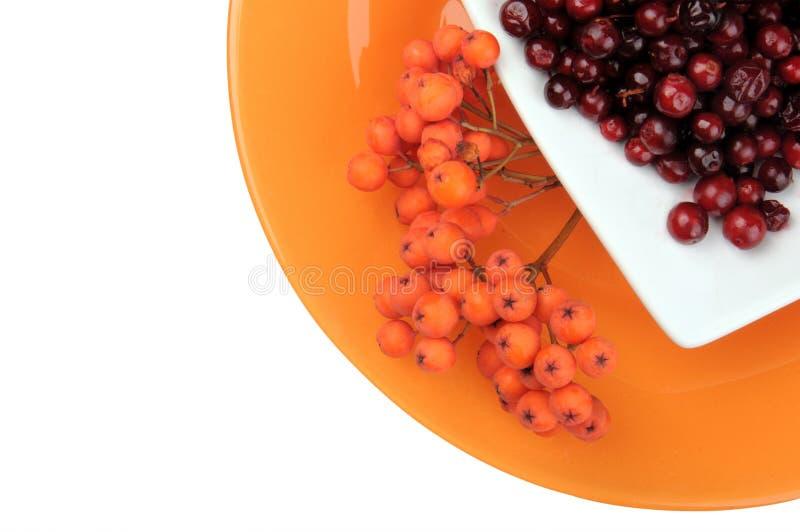жизнь осени все еще Красные сочные зрелые ягоды cowberry и ягоды рябины лежат на белом поддоннике на оранжевой круглой плите стоковая фотография rf