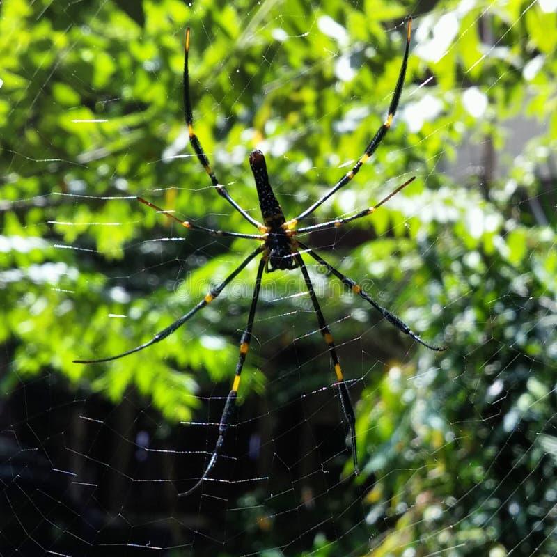 Жизнь паука стоковые фотографии rf