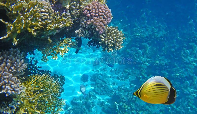 жизнь подводная стоковое изображение