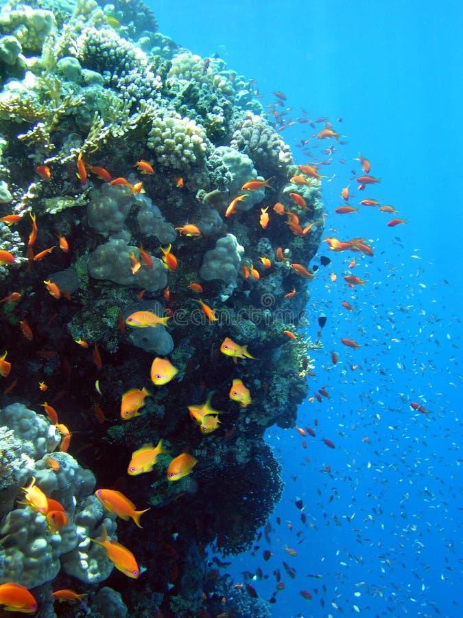 жизнь подводная стоковая фотография
