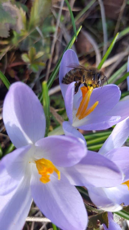 Жизнь пчел стоковые фотографии rf