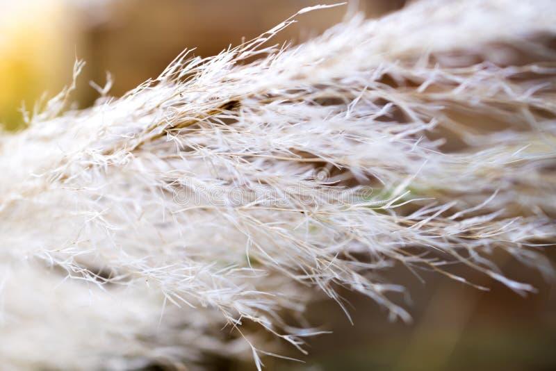 Жизнь растений стоковые изображения