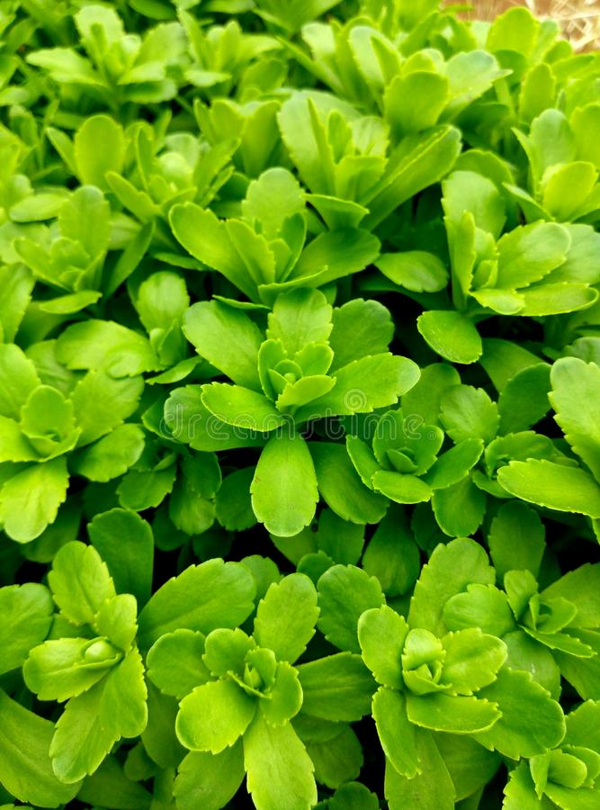 Жизнь растений стоковые фото
