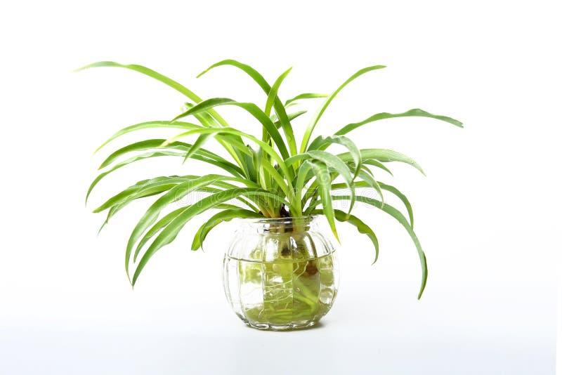 Жизнь растений стоковое фото rf