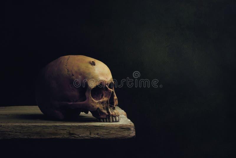 Жизнь, смерть и воскресение Vanitas стоковые фотографии rf