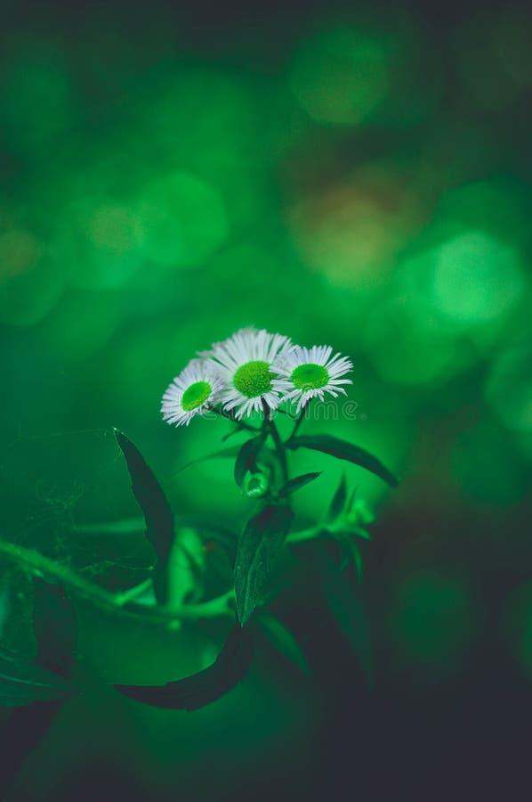 Жизнь цветка стоковые изображения rf