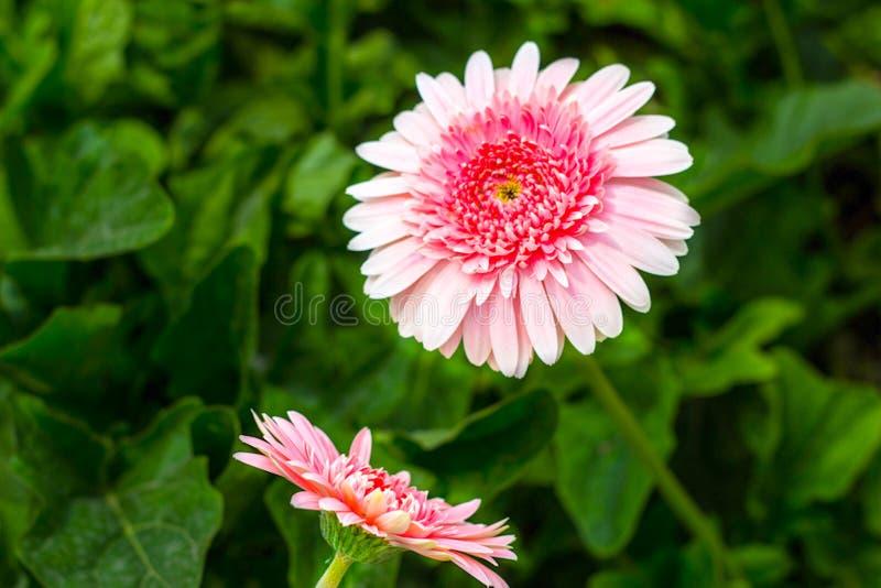 Жизнь цветков стоковая фотография