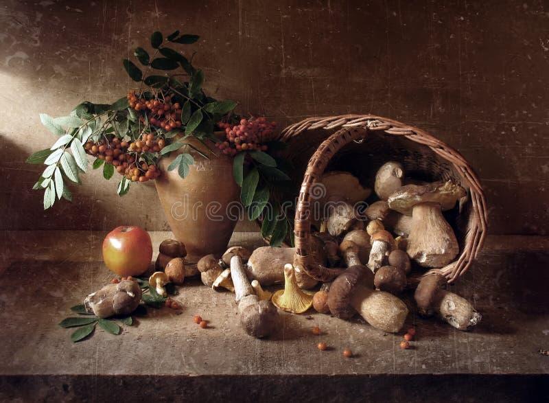Жизнь Stil с грибами стоковое изображение
