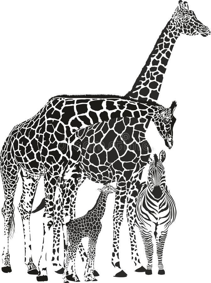 2 жирафа и 2 зебры иллюстрация штока