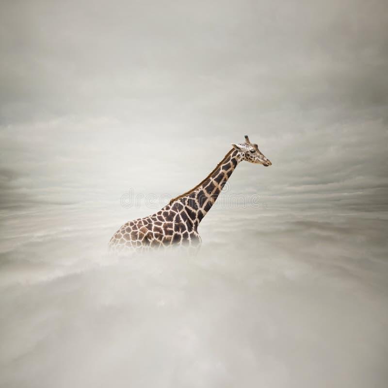 Жираф в небе стоковое изображение