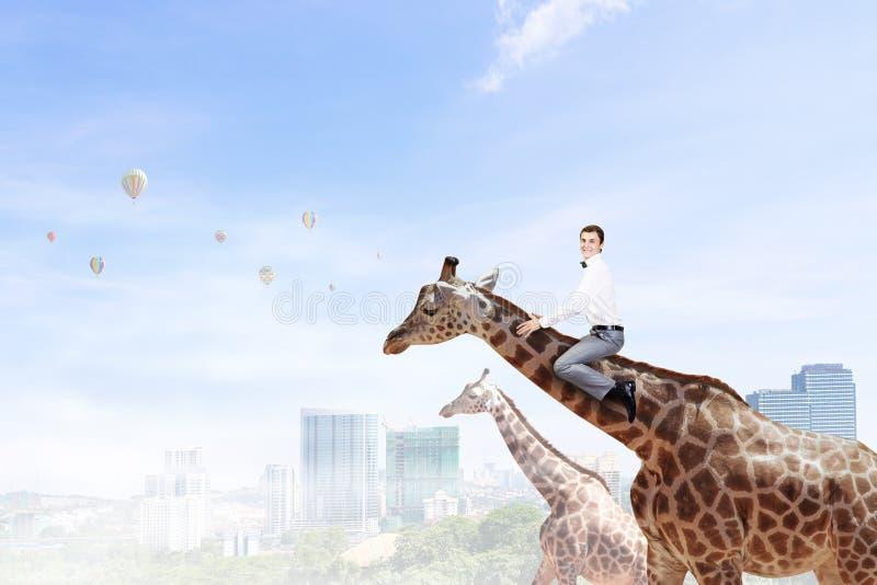 Жираф езды человека Мультимедиа стоковое изображение rf