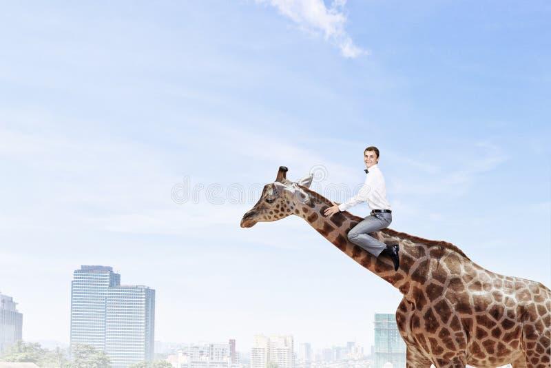 Жираф езды человека Мультимедиа стоковое фото rf