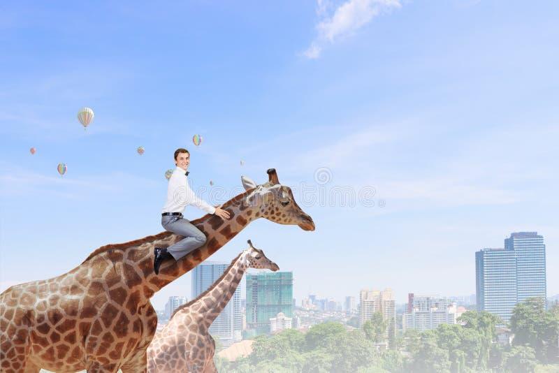 Жираф езды человека стоковое изображение