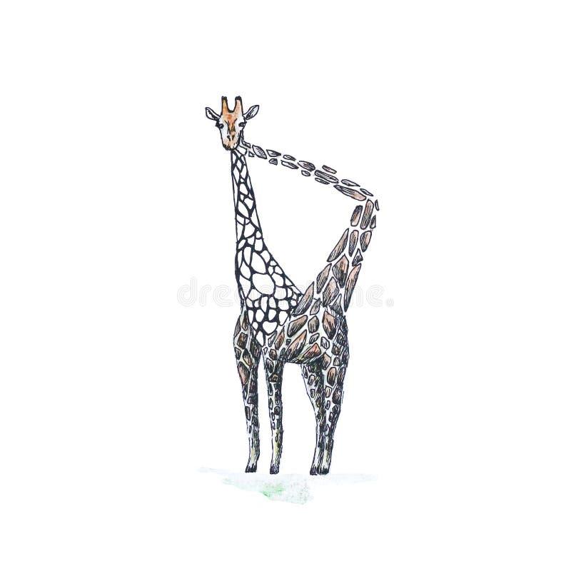 Жираф ест их пятна Нарисованный вручную Чертеж акварели clo бесплатная иллюстрация