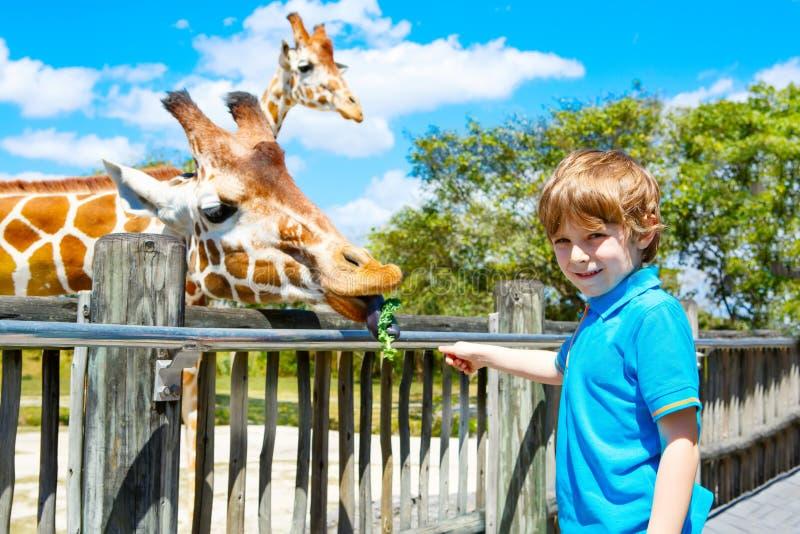 Жираф мальчика маленького ребенка наблюдая и подавая в зоопарке стоковые изображения